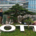 Dịch vụ chăm sóc cây xanh chuyên nghiệp – SalalaGreen