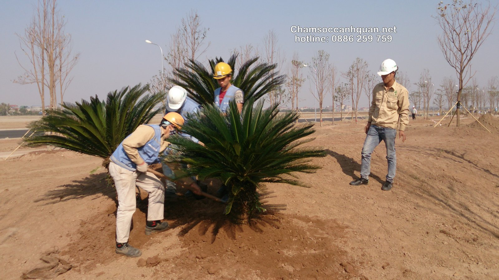 Thi công cảnh quan nhà máy Samsung Bắc Ninh
