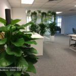 Thuê cây nội thất đẹp tại Công Ty TNHH Đầu Tư CBEST – SalalaGreen