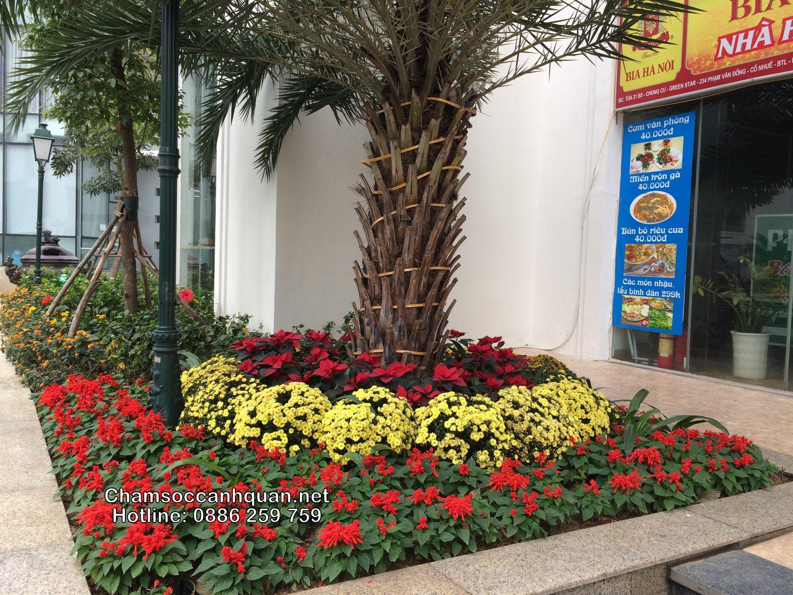 Thi công trồng hoa, trang trí đón xuân tại Green Star