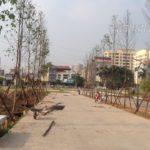 Thi công trồng cây dự án The Manor Hà Nội