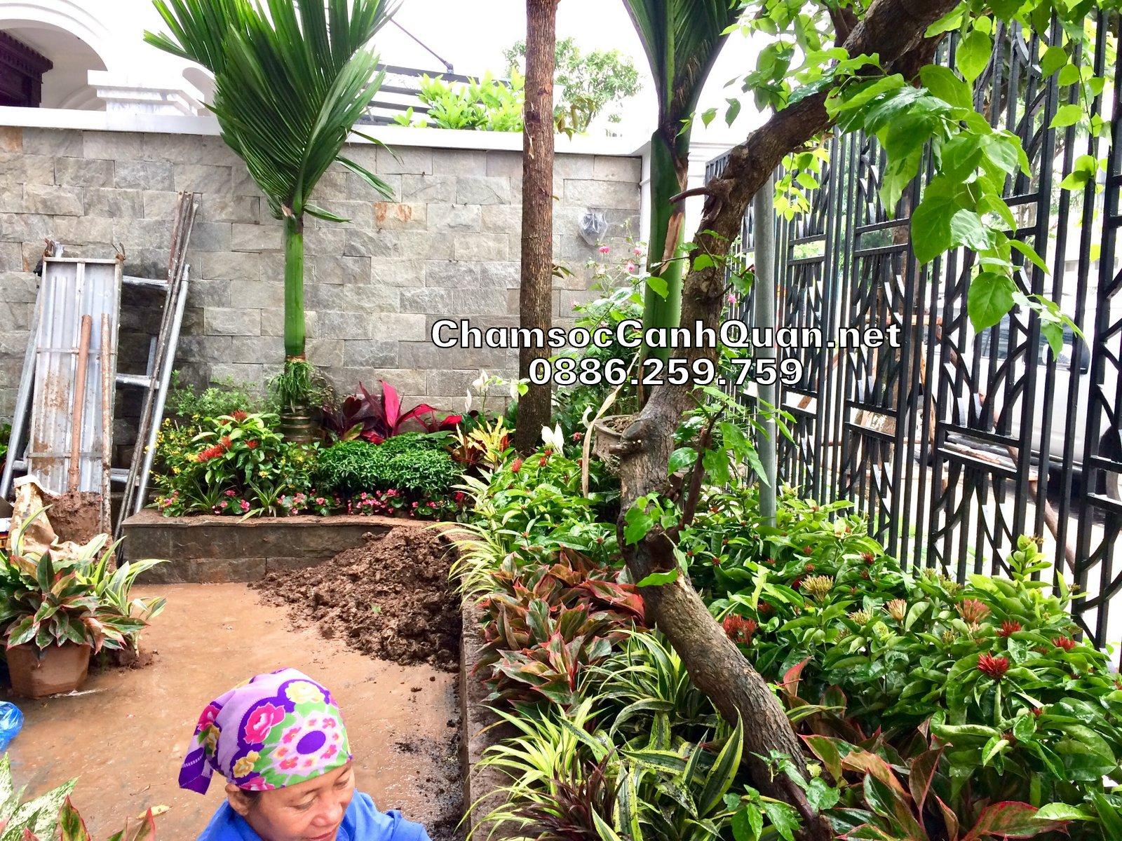 Trồng hoa thảm trongThi công sân vườn Vinhomes The Harmony sân vườn