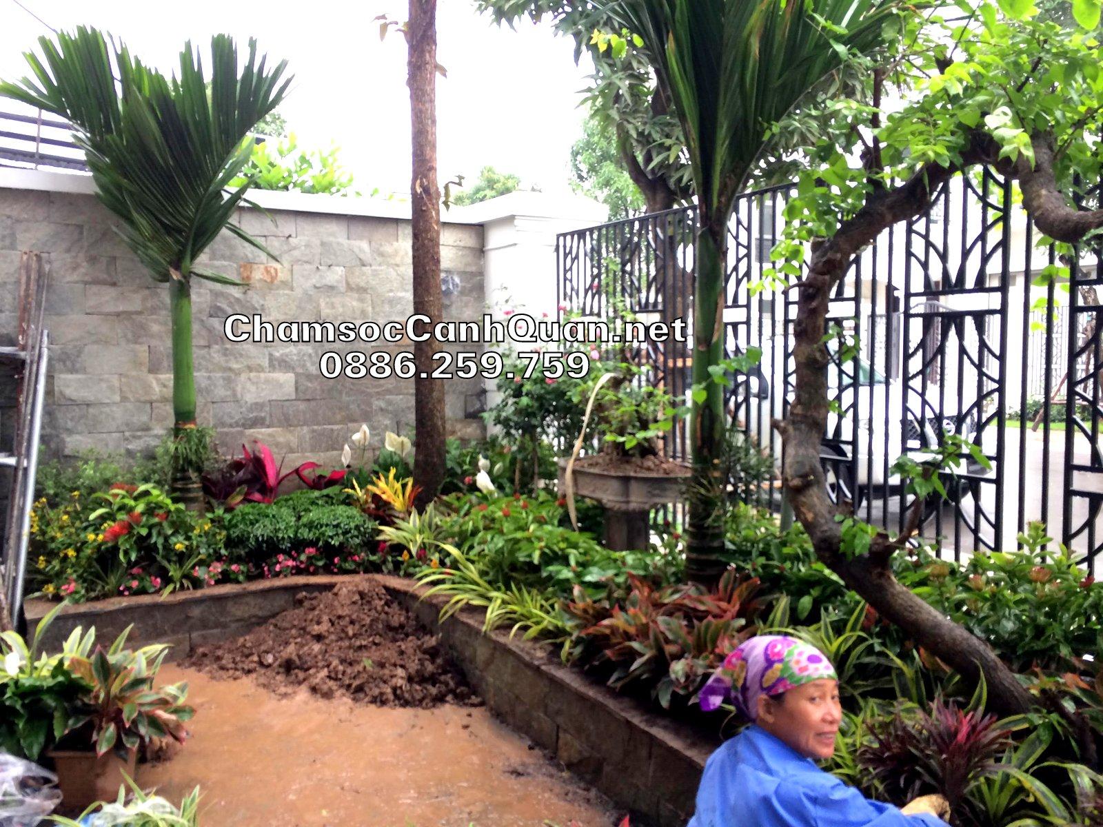 Phối cây hoa thảThi công sân vườn Vinhomes The Harmonym để đang dạng màu sắc cho sân vườn