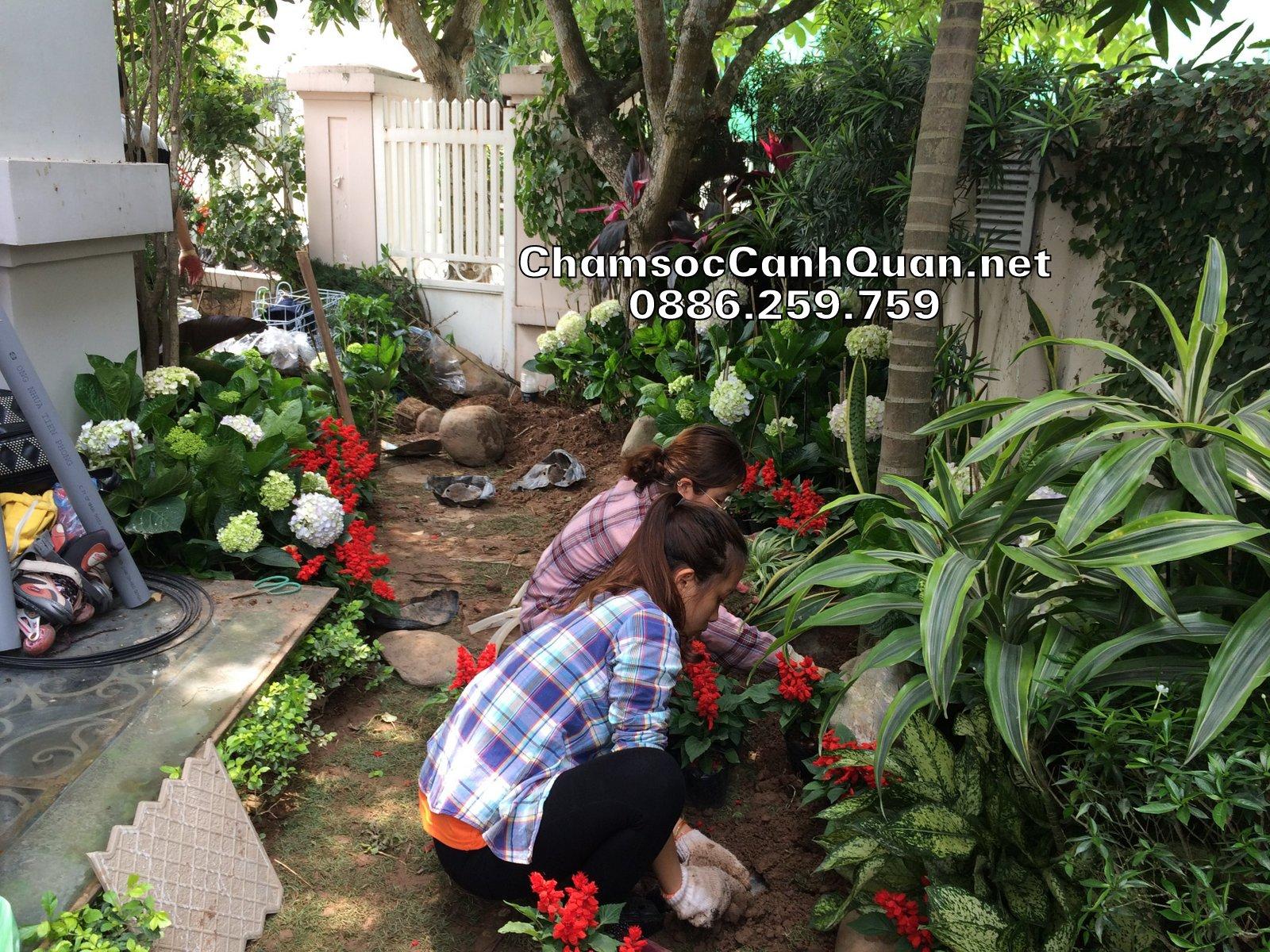 Trồng cây sân vườn