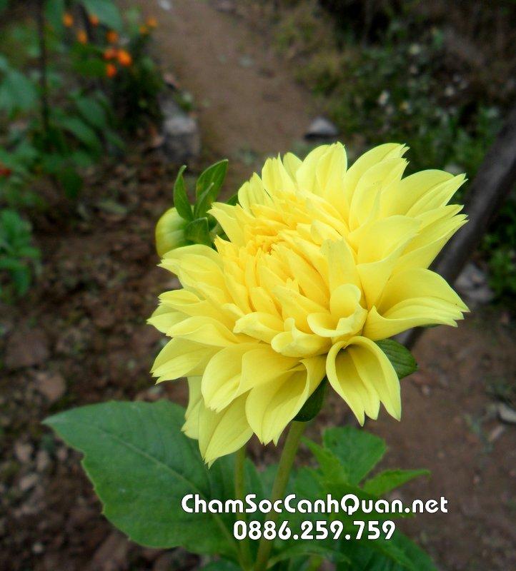 Hoa thực dược