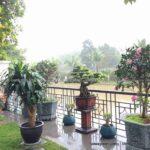 Chăm sóc cây xanh sân vườn Hướng Dương Vinhomes The Harmony