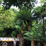 Sân vườn biệt thự Vinhomes Riverside Bằng Lăng – SalalaGreen